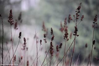spring & forest | 9