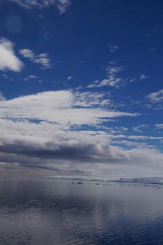 589 Weddell Sea met Adeliepinguin