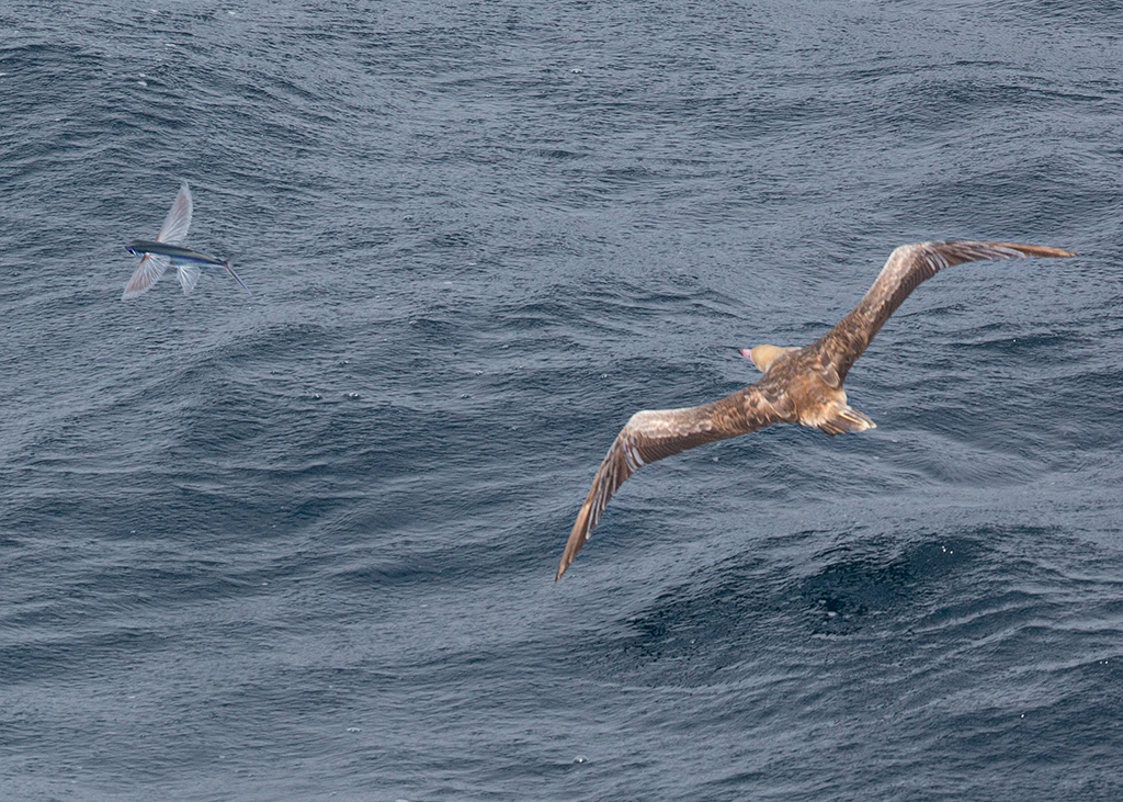 Red Footed Booby 2014-01-31