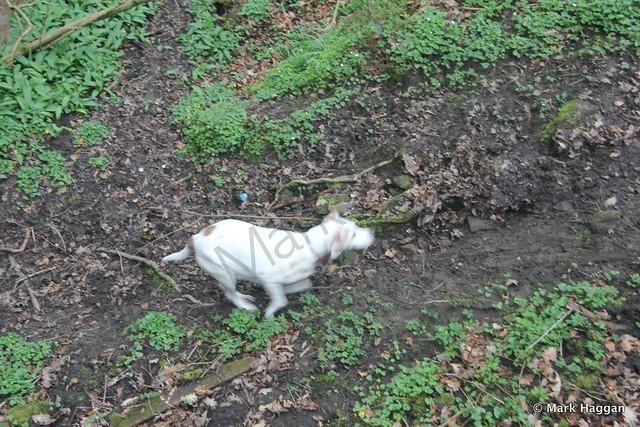 Berta enjoys Towneley Park, Burnley, Lancashire