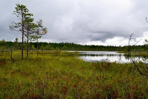 summer lake nature finland geotagged august fin ph bog virrat 2011 pirkanmaa 201108 20110810 geo:lat=6223889200 geo:lon=2416674600 saukkolampi