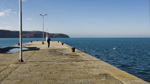 seaside harbour gulls slovenia phototaking izola