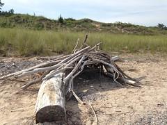 wetland(0.0), root(0.0), mud(0.0), driftwood(1.0), soil(1.0), wood(1.0), tree(1.0), geology(1.0),