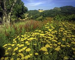 Garden @ Holman Ranch