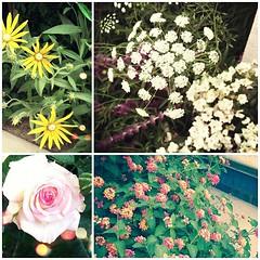 #spring #garden #greenthumb #flowers