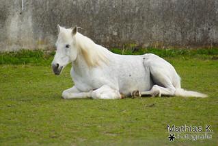 Ein Traumpferd