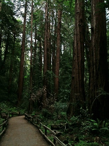 Muir Woods by []Aaroneous Monk[]