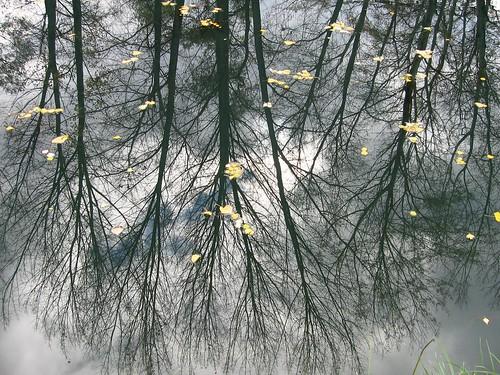 tree river ohrid biljaniniizvori