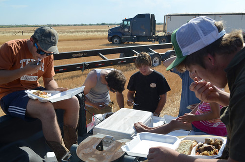 A family meal in the field