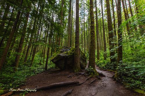 trees boulders trail rattlesnakeledges