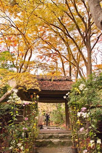 【写真】2012 紅葉 : 祇王寺/2021-09-05/IMGP7852