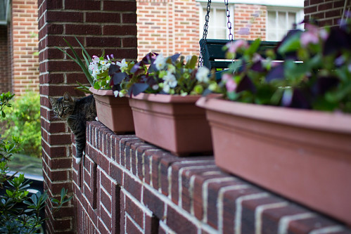 Front porch planter and cat.jpg