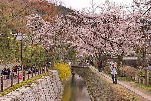 【写真】2013 桜 : 哲学の道/2018-12-24/IMGP9203