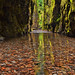Oneonta Gorge by stokes rx