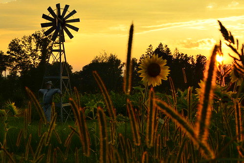 sunset windmill landscape sunflower mygearandme mygearandmepremium