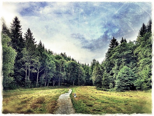 road autumn landscape forrest sweden path schweden august swedish sverige landschaft suede svensk landskap ruotsi suècia sueco suedoise swedishlandscape svenskt sandared schwedish mindigtopponalwaysontop