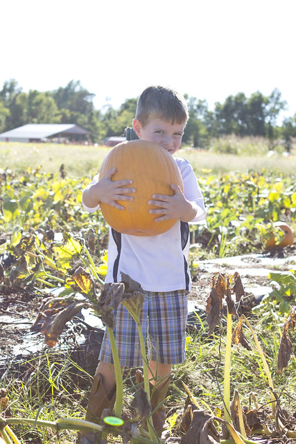 pumpkinpatch2013_adollopofmylife_25