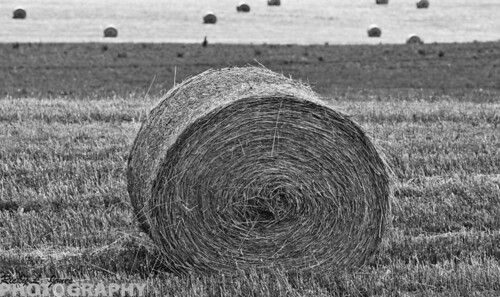 Bails of Straw 10 by Ricky L. Jones Photography