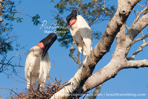 faltan 174 días para el mundial: el Pantanal
