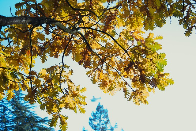 Yellow Leaves Over Seaplane