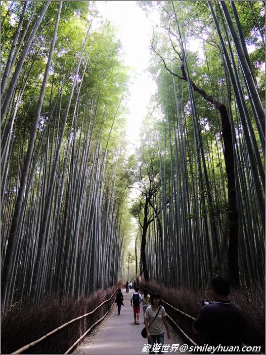 嵐山~竹林步道