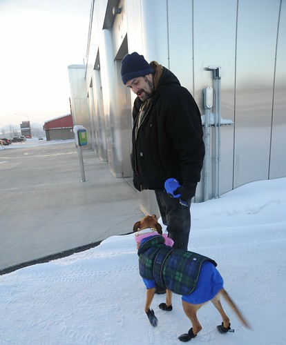 Saint Thomas with Rosie in her plaid black watch arctic outfit and booties just about to walk across the dry Laser Wash heated concrete pad, reflective building, Anchorage, Alaska, USA by Wonderlane