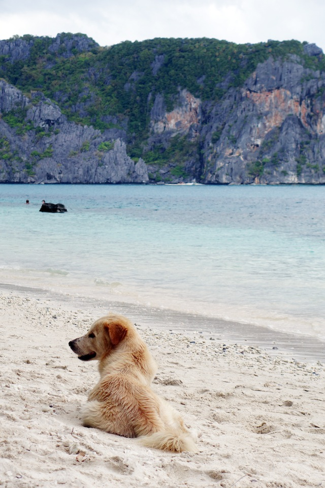 El Nido Palawan island hopping beach dog