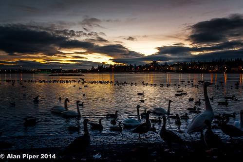 Reykjavik Lake Sunset