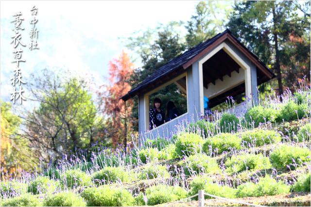 【台中旅遊景點】新社薰衣草森林~薰衣草花季盛開!來旅行吧~《13遊記》