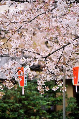 Ueno Sakura