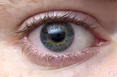 iris, skin, eyelash, eyelash extensions, close-up, eye, organ,