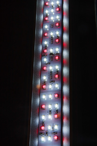 Red and White LED's in Planted + Aquarium Light