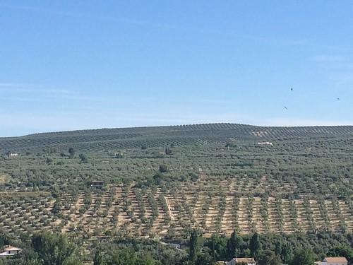 Valle de Pego