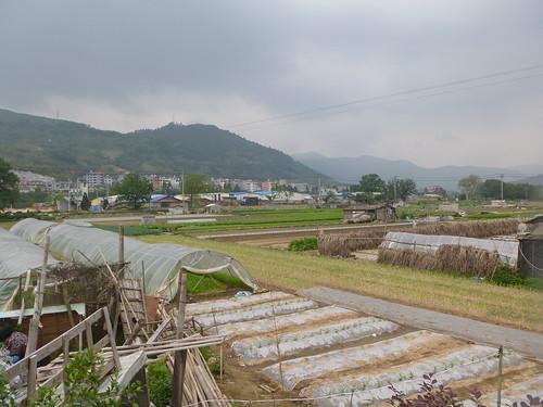 Fujian-Xiapu-Champs (1)