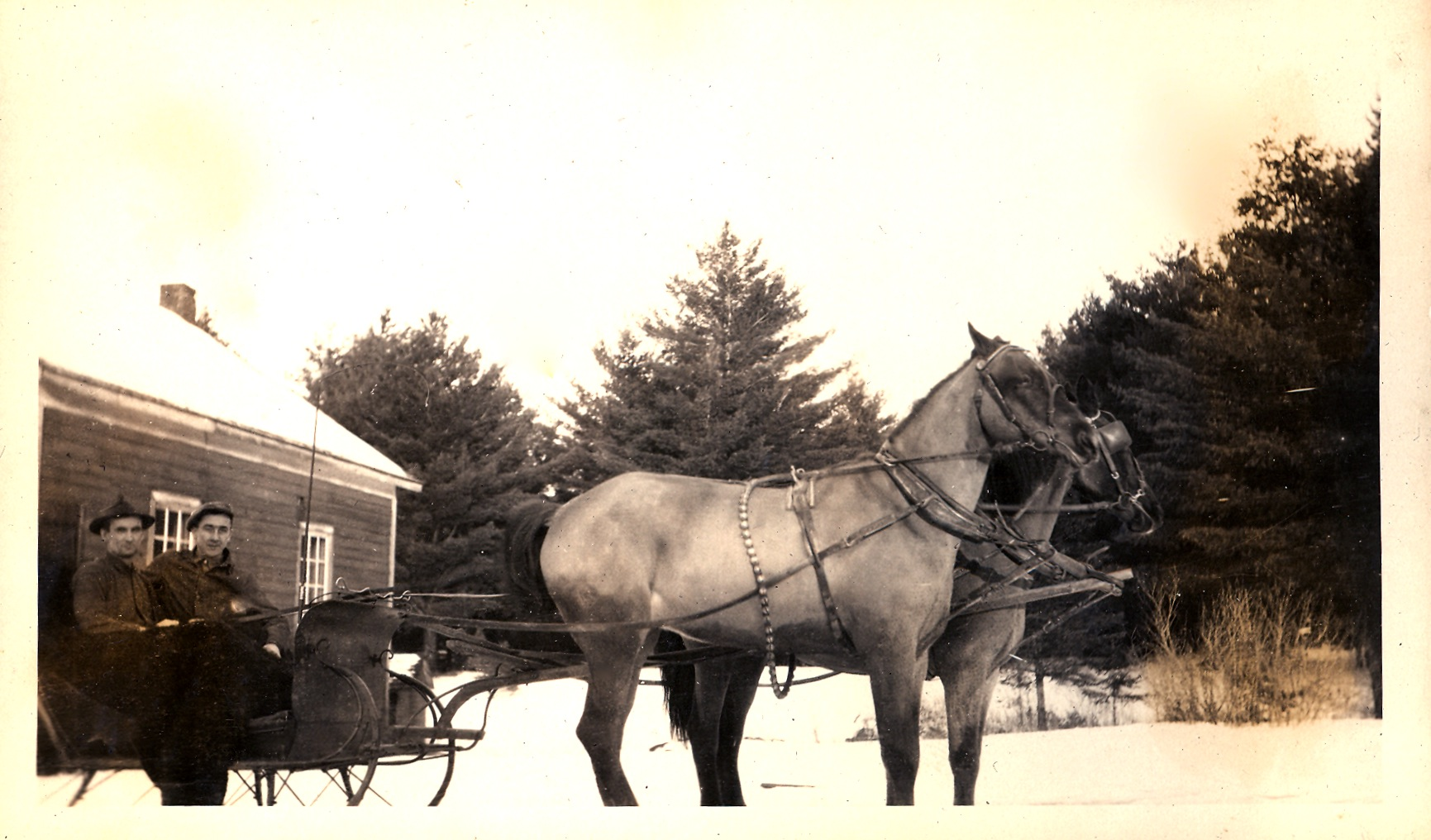 Horse and Sleigh at the Cloyne Hall