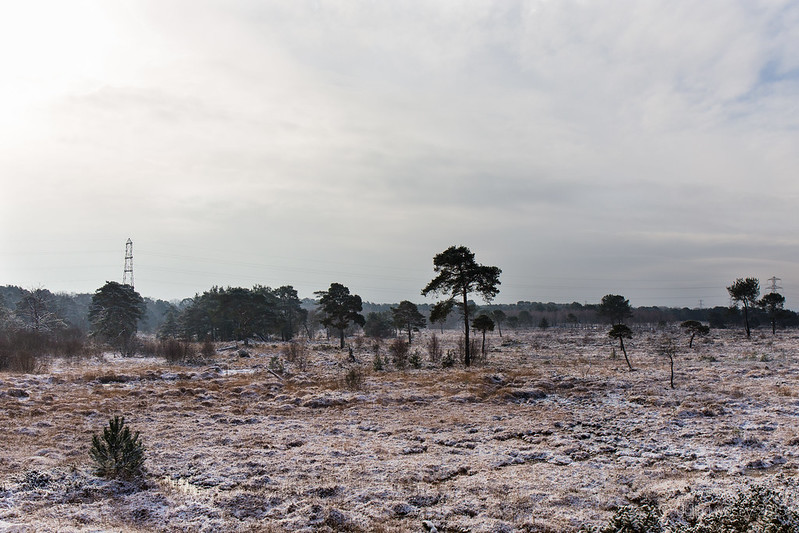 Snow on Upton Heath