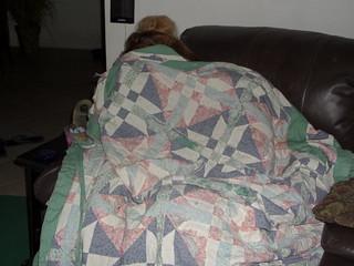 Quite Comfy Under the Quilt