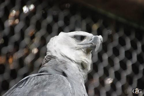 Zoo Karibikinsel Belize 19.11.2014 56