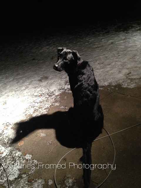 23. | spotlight on the dog.