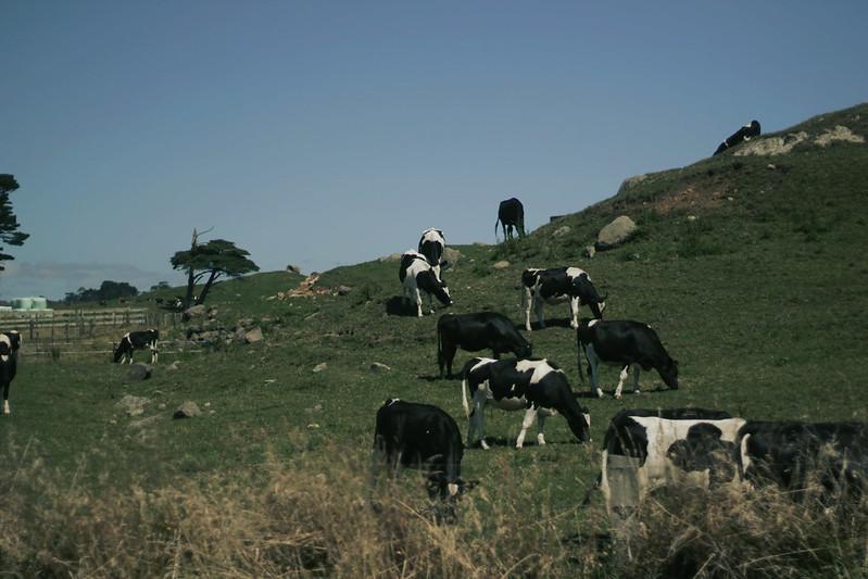lehma2