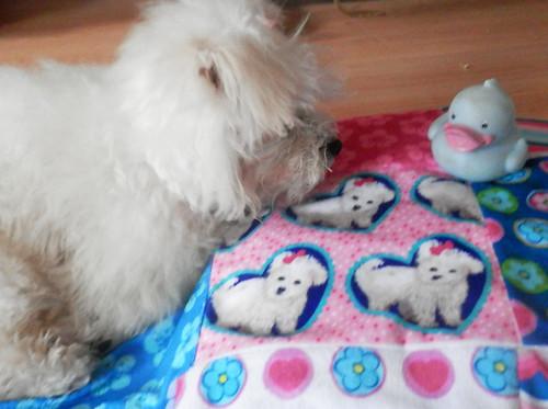Ducky! I love my new Minky blanket!