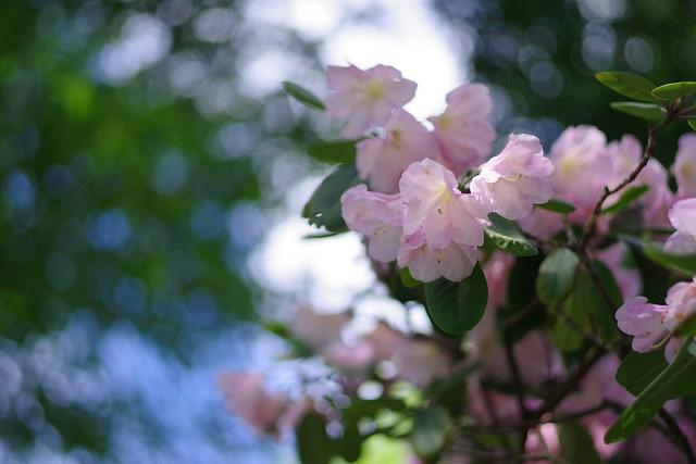 2016/04/29_鬼怒川-75