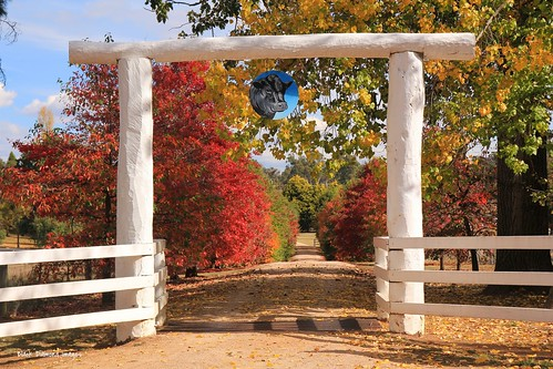 Entry Gate to Karoo Angus Stud, Lawsons Lane, Meadow Flat, NSW
