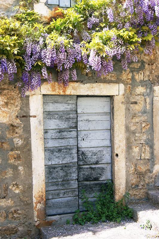 Глициния над входом в дом