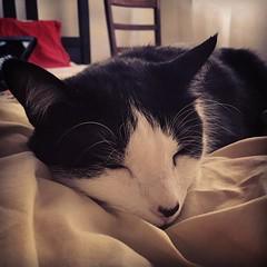 This face ❤️❤️❤️  #kitteh #kittehlove #catsofinstagram #catstagram