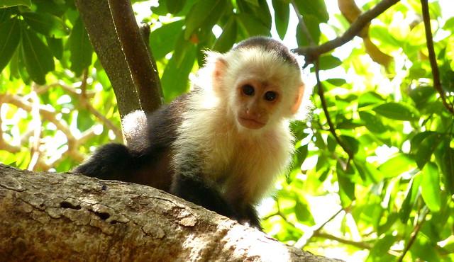 Itsy Bitsy Tiny Monkey