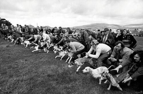 Jill Freedman, Coursing, Cumberland, England, 1974