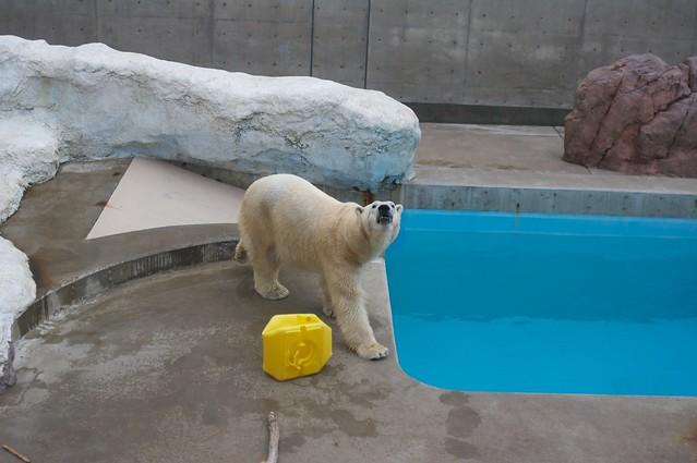 Oga aquarium 2