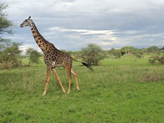 8721831882 8ab21fdeb8 m The best vacation and best experience. Thomson Safaris Review: Ed & Karen B.
