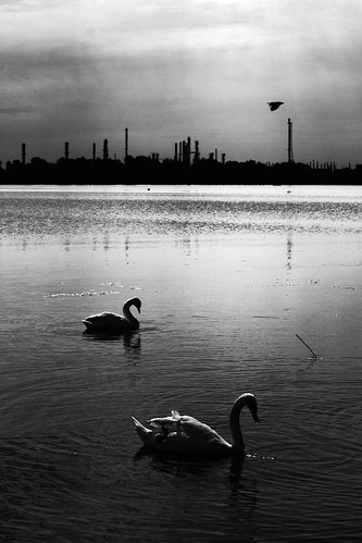 Indifference III - Silhouettes and a bird